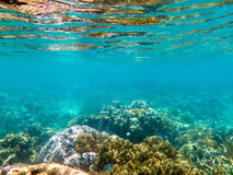 Underwater View of Great Barrier Reef. Coral growing underwater at the Great Barrier Reef in Australia Stock Photography