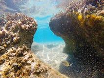 Underwater view Stock Photo