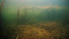 Underwater view of the lake stock video footage