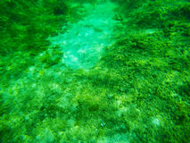 Underwater view of a Sardinian sea floor Royalty Free Stock Photos