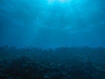 Underwater view Stock Photography