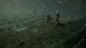 Underwater view of seaweed farm with pieces of weed tied onto lines and left to grow Stock Photography