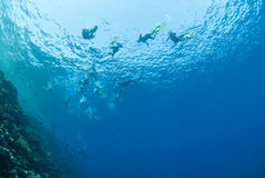 Underwater view of snorkelers at the surface. Underwater view of snorkelers at the water surface. Gordon reef, Straits of Tiran, Red Sea, Egypt Stock Images