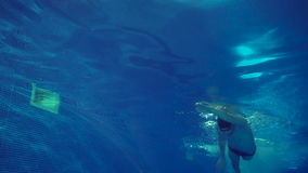 Underwater view to the beautiful professional swimmer swiming crawl stroke in the pool stock video