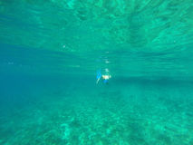 Underwater view of a woman snorkeling in the tropical sea Royalty Free Stock Images