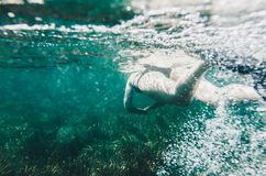 Underwater view of a woman swimming close surface water stock image