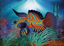 Underwater wallpaper with red tropic fish. Vector illustration Stock Photography
