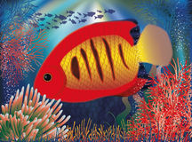 Underwater wallpaper with red tropical fish Royalty Free Stock Photo