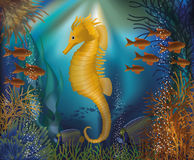 Underwater wallpaper with seahorse seafish Royalty Free Stock Photos