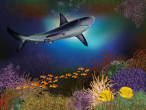 Underwater wallpaper with shark Stock Photo