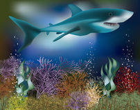 Underwater wallpaper with Shark, vector Royalty Free Stock Images