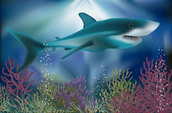 Underwater wallpaper with white Shark Stock Photography