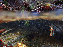 An underwater and water absorption by a stream Stock Photos