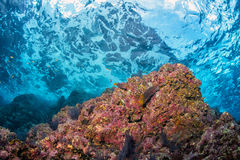 Underwater waves on the reef Stock Images