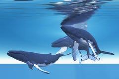 Underwater Whales stock photo