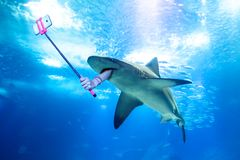 Underwater selfie shark. Underwater white shark taking a selfie picture with a human arm holding a selfie stick. Undersea marine funny background Stock Photography
