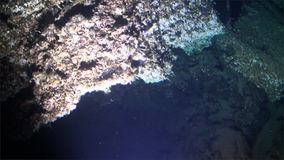 Underwater wildlife deep sea view from submarine Pacific Ocean Cocos Island. Costa Rica. Extreme diving. Swim in world of unique colorful beautiful ecosystem stock video footage