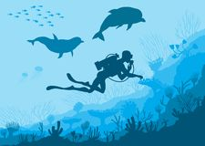 Underwater wildlife, diver, dolphins Royalty Free Stock Photography