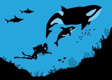 Underwater wildlife, killer whales and Divers Royalty Free Stock Photos