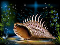 Underwater World. The underwater world of fish,  seashell and plants Stock Photography