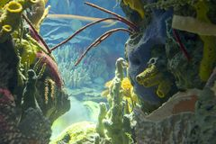 Underwater world. Underwater colorful plants and corals Stock Image