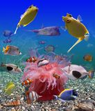 Underwater world. Bright exotic fishes are on  picturesque background of the sea-bottom Stock Image