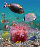 Underwater world. Bright exotic fishes are on  picturesque background of the sea-bottom. Each fish possesses bright coloring Stock Photos