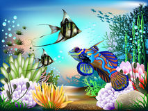 Underwater World. The underwater world of fish and plants Royalty Free Stock Photo