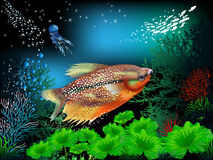 Underwater World. The underwater world of fish and plants Royalty Free Stock Photography