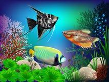 Underwater World. The underwater world of fish and plants Stock Photos