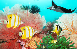 Underwater world stock images