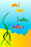 The underwater world. Of  fish Royalty Free Stock Photography