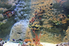 Underwater world. Life in underwater world aquarium Royalty Free Stock Image