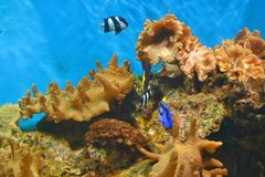 Underwater world. Fish and corals in water Stock Photo