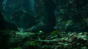Underwater World. Various fishes in an underwater scenery. Canon HV30. HD 16:9 1920 x 1080 at 25.00 fps. Progressive scan. Photo JPG Compression. No audio stock footage