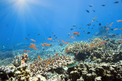 Underwater world Royalty Free Stock Images