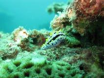 Underwater world. Beautiful diving underwater world Royalty Free Stock Photography