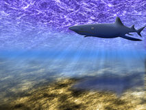 The underwater world. Abstract background of the underwater world with a floating shark Royalty Free Stock Photography