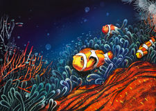 Underwater world. Anemones and clown-fish Royalty Free Stock Images