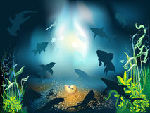 Underwater World. The underwater world of fish and plants Royalty Free Stock Images