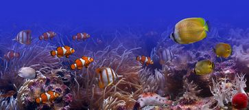 The underwater world. It is very colourful photo of the underwater world and  its inhabitants - exotic fishes Stock Image