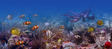 The underwater world. It is very colourful photo of the underwater world and  its inhabitants - exotic fishes and octopus Stock Image