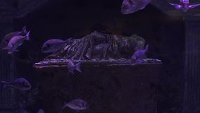 Underwater world. Aquarium colorful fishes in dark deep blue water. Beautiful colored fish in the water. Underwater world. Aquarium colorful fishes in dark deep stock footage