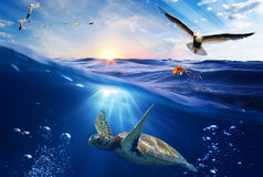 Underwater world background. With sea turtle Royalty Free Stock Photo