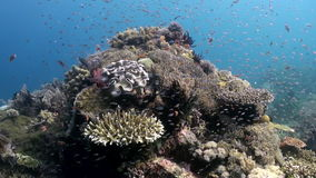 The underwater world of Bali Indonesia Marine Life stock footage