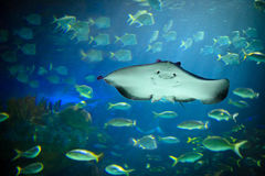 Underwater world. Beautiful view of underwater world Royalty Free Stock Photos