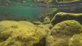 The underwater world of the black sea with fish stock video
