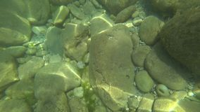 The underwater world of the black sea with fish stock footage