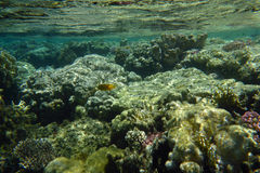 Underwater world of coral. Colorful coral reef with fishes Royalty Free Stock Image