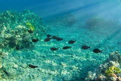 Underwater world. Coral and fish in the sea at one meter deep Royalty Free Stock Photos